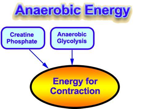anaerobic picture 7