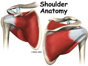 loose shoulder muscle anatomy picture 15