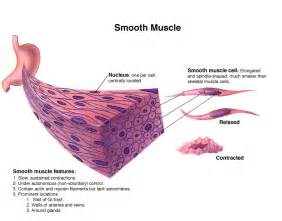 are smooth muscle multinucleated and spindled picture 11