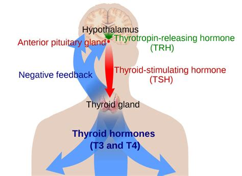 increase in thyroid conditions picture 1