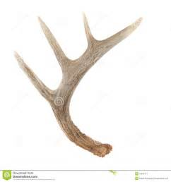 adverse effects of deer antler picture 6