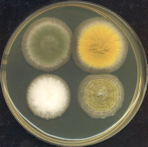 why are some yeast hard to cure picture 14