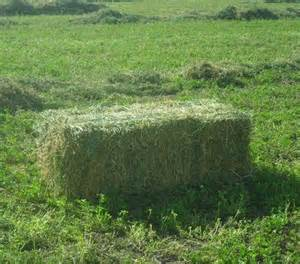 3 string alfalfa bales for wholesale in texas picture 15