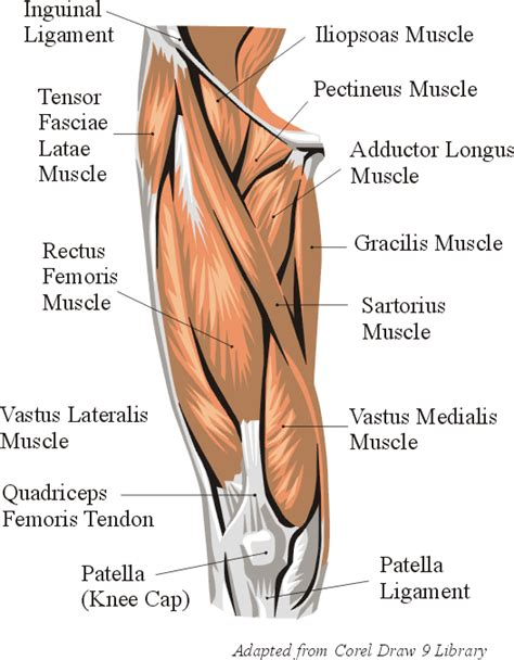 muscle building in horses picture 1