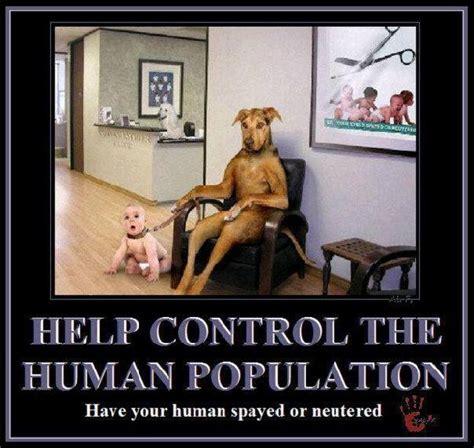 human male pet is get it neutered burdizzo picture 1
