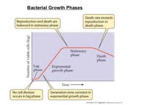 bacterial growth picture 5
