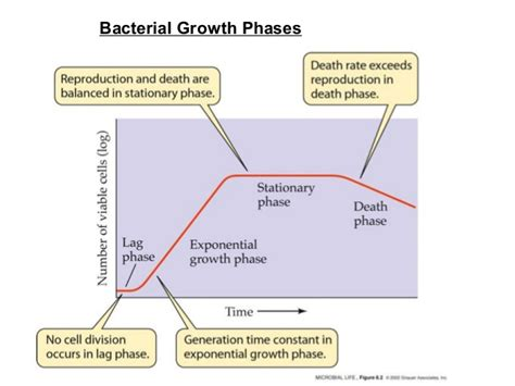 bacterial growth picture 1