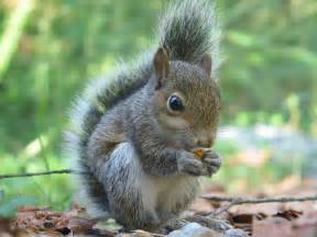 picture of squirrel h picture 1