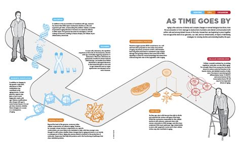 an aging protein picture 8