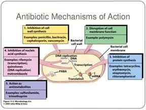 antibiotics bacterial infections picture 2