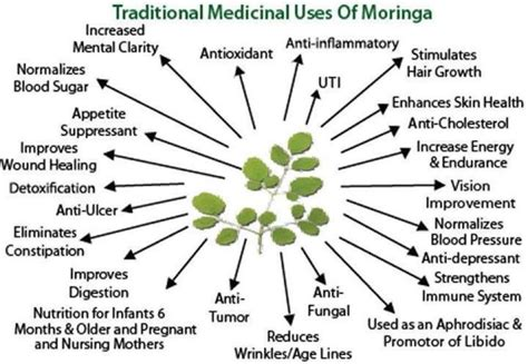 can moringa cure loss of libido picture 6