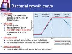 bacterial growth phases picture 15