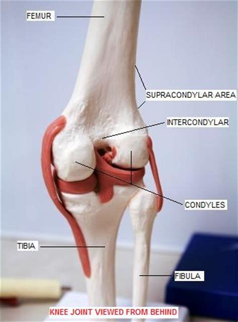 medial knee pain + joint space picture 7