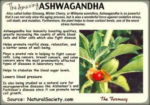 how much ashwagandha for weight loss picture 3
