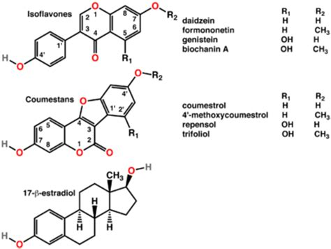 testosterone and estradiol are nucleic acids picture 7