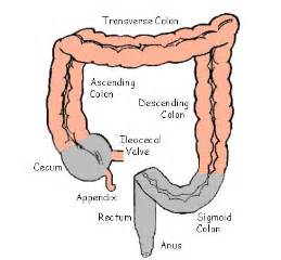 colitis of the desending colon and the sigmoid picture 1