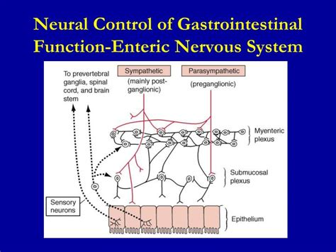 gastrointestinal function picture 3