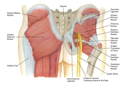 are insures good for muscle recoery picture 5