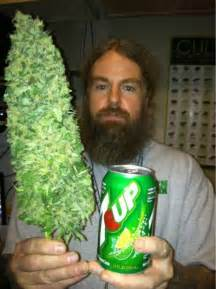 bud or buds or marijuana or pot super picture 11