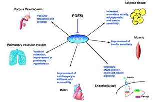 phosphodiesterase inhibitors erectile dysfunction medication picture 3