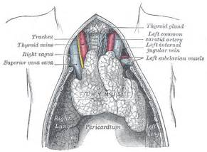eous echo structure of thyroid picture 14