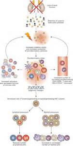 destruction of roots of h by immune system picture 13