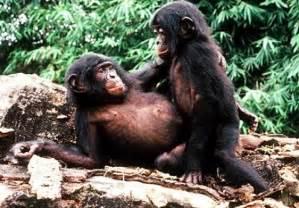 monkey sex online picture 1