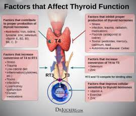 thyroid is elevated picture 3