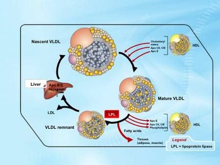 What is vldl cholesterol picture 10