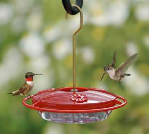 hummingbird diet picture 3