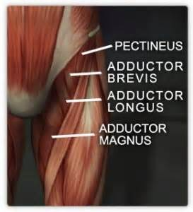 groin muscle pull picture 2