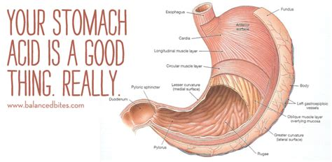 gall bladder disease and diabetes picture 13