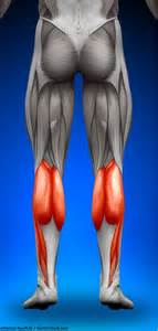 ab muscle exercise picture 13