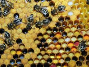 pollen hives picture 2