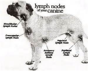 canine liver disease research picture 19