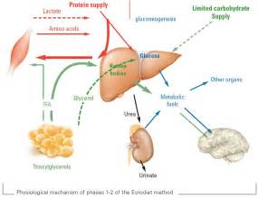 amino acids in end stage liver disease picture 7