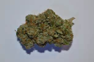 +cush berry picture 1