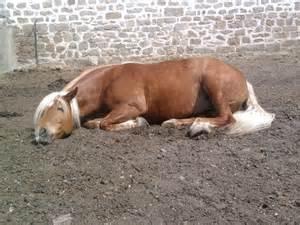 pony sleeping picture 15