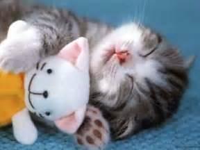 do cheetahs sleep picture 14