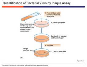 virus culture or assay for the herpes virus picture 7
