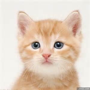 feline h picture 14