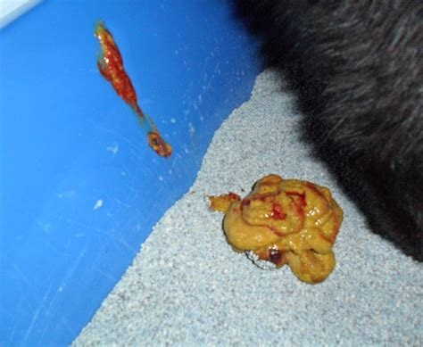 bloody bowel movements picture 7