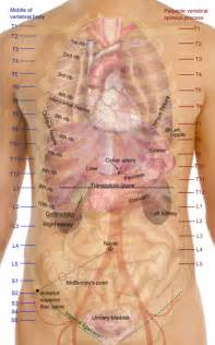gall bladder body placement picture 10
