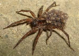 spider picture 2