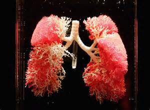 cool...that will workbacterial lung infection picture 5