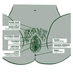 male vigina picture 13