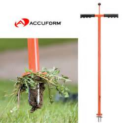 dandelion removal tools picture 10