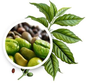 green coffee bean extract health benefits picture 5