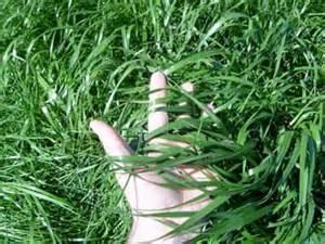alfalfa prices picture 9