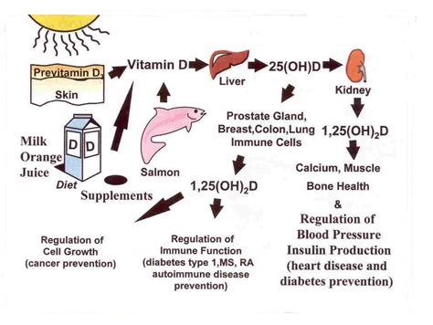 food for prostate health picture 15